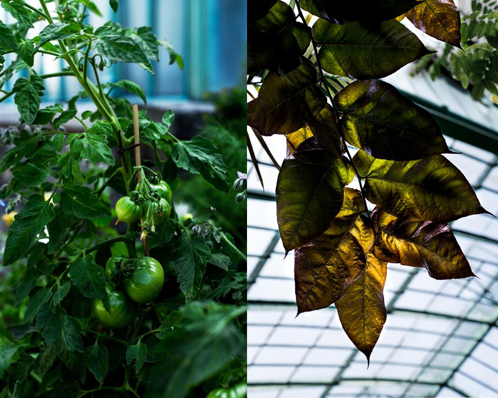 feuilles et verdure